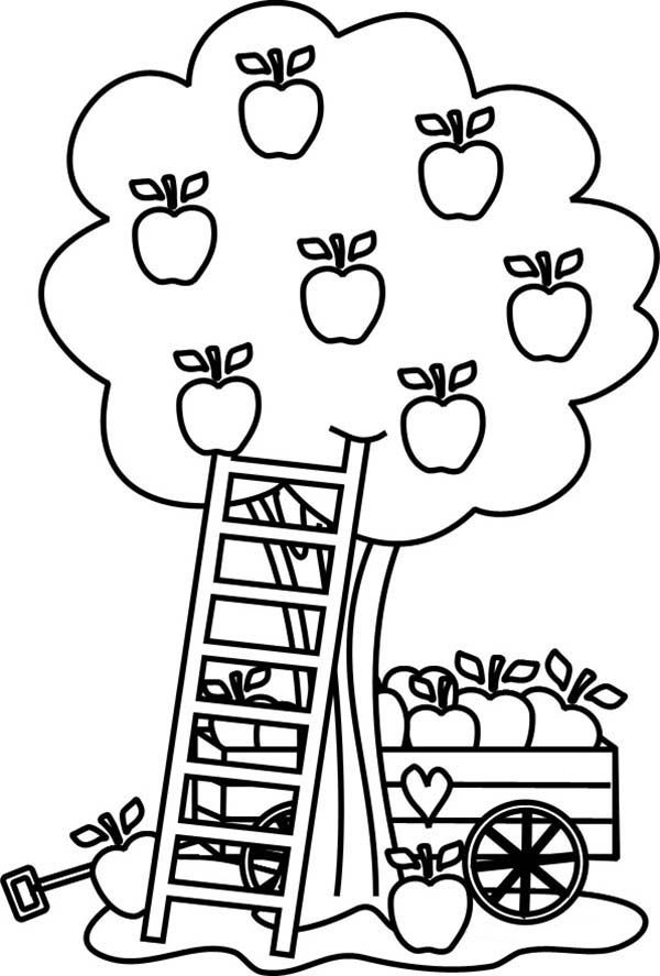 Apple Tree Pictures To Color