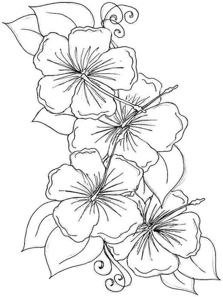 flower coloring pages and facts - photo#11