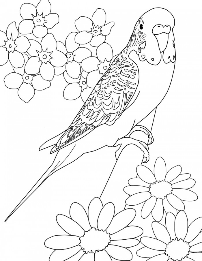 canary bird coloring pages - photo#40