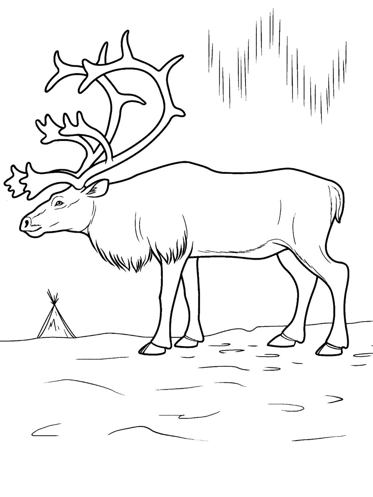 collection antarctic animals coloring pages pictures worksheet