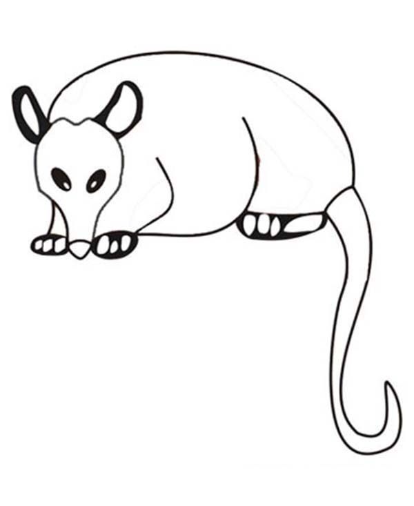 Possum Colouring Pages Coloring Home Possum Colouring Pages