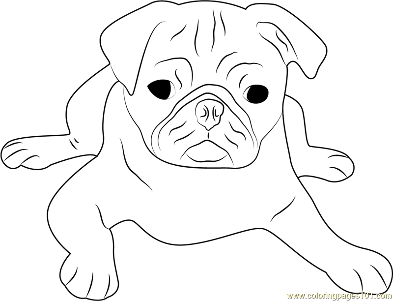 Cute Pug Face Coloring Page - Free Dog Coloring Pages ...
