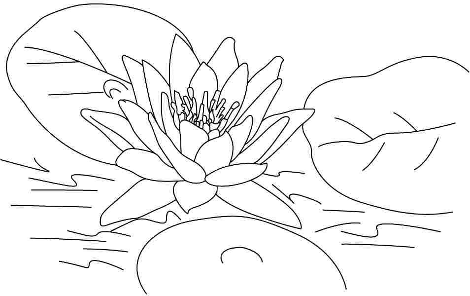 7 pics of lotus flowers coloring page lotus flower coloring 7 pics of lotus flowers coloring page lotus flower coloring mightylinksfo