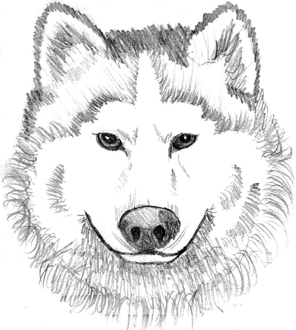 baby wolf coloring pages printable kids colouring pages - Wolf Coloring Pages For Adults