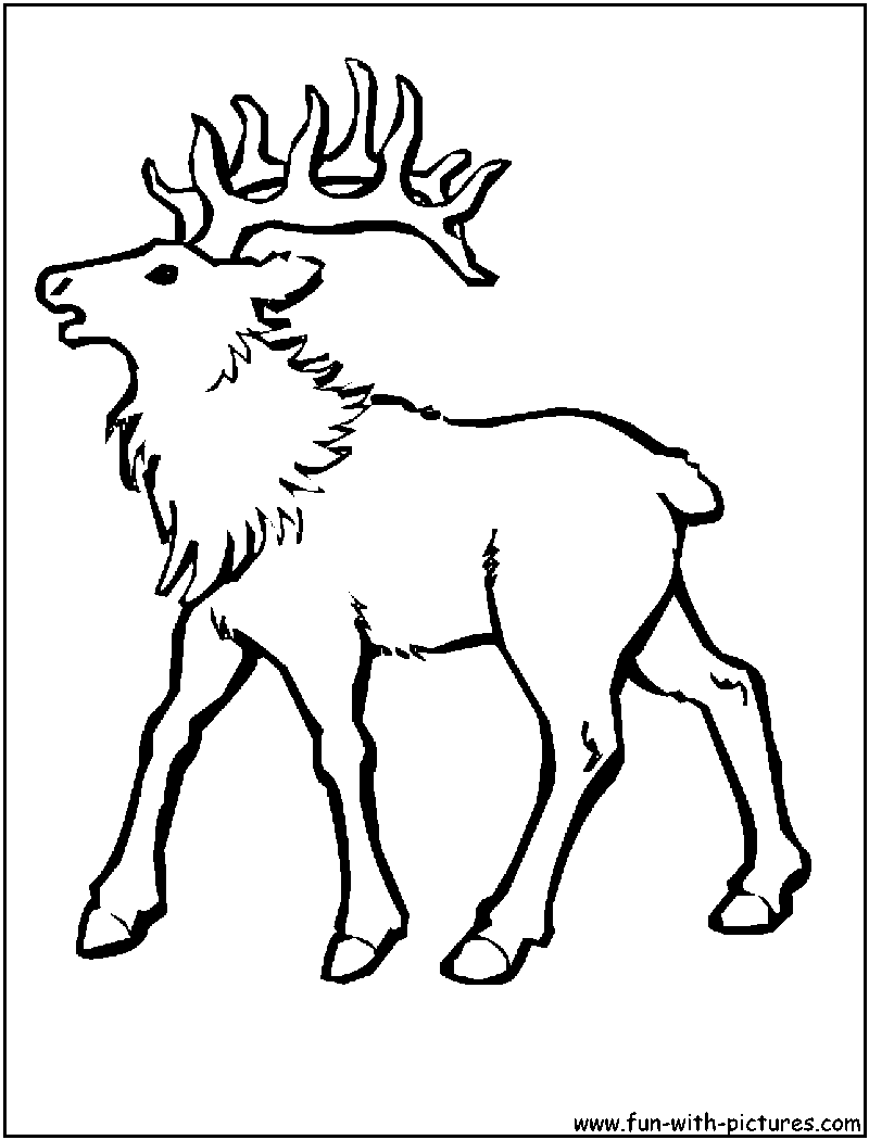 Free Printable Elk Coloring Pages - Coloring Home