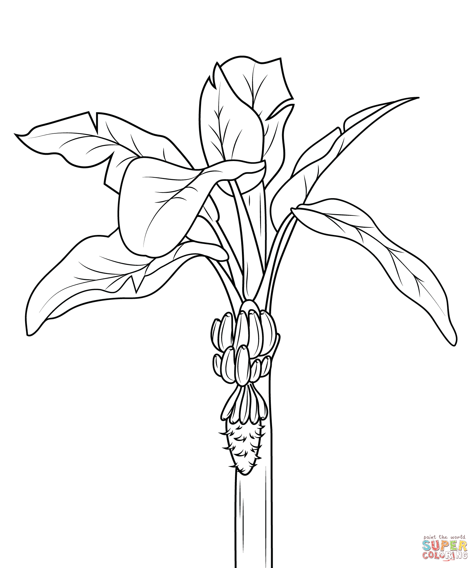 Bananas coloring pages | Free Coloring Pages