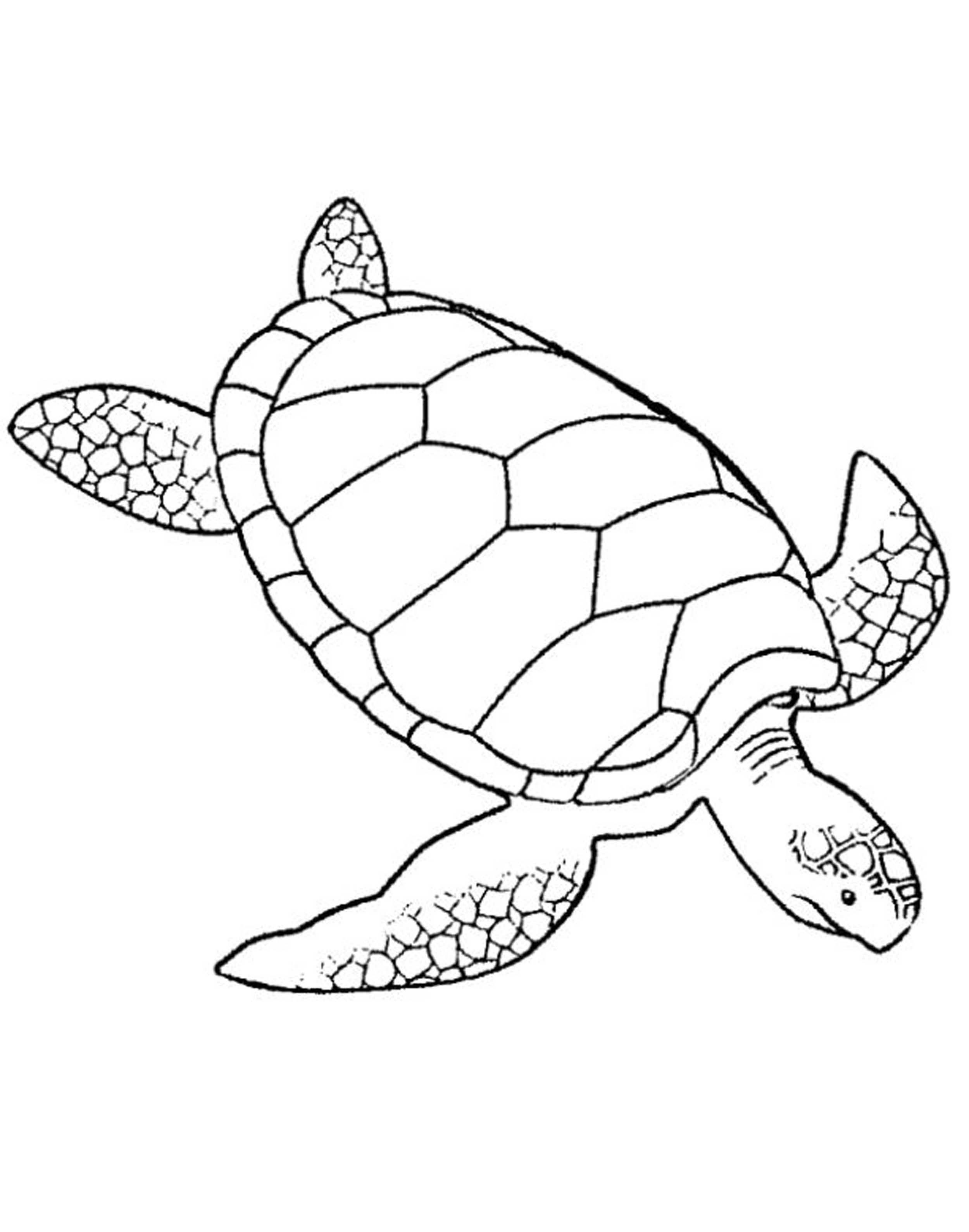 Turtles Coloring Pages For Adults Printable Kids Colouring Pages
