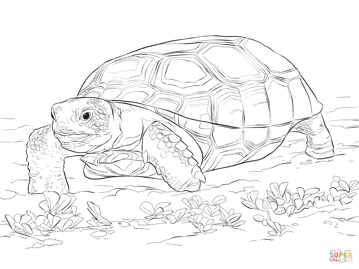 Tortoise Coloring Pages - Coloring Home