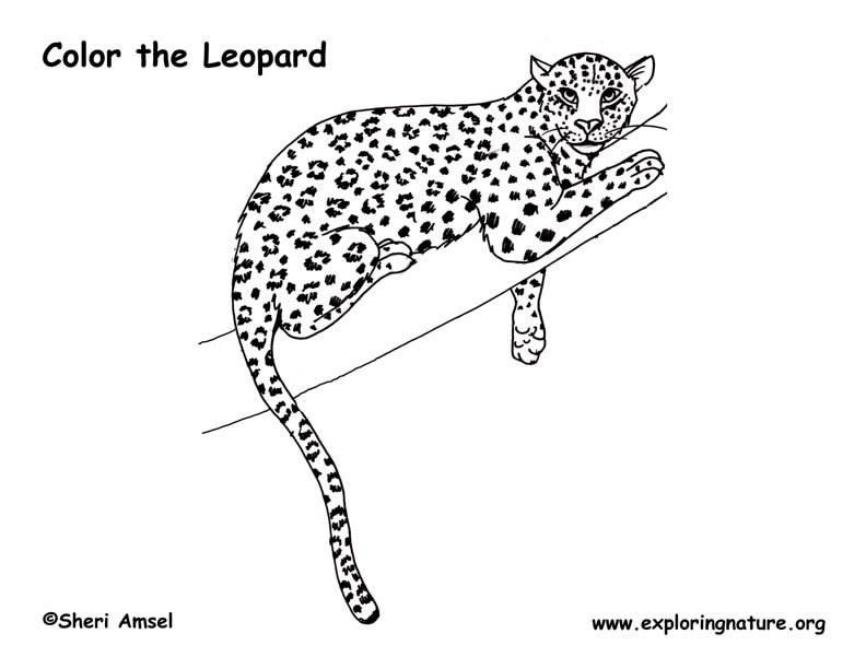 Leopard Coloring Pages Pdf : Snow leopard coloring page home