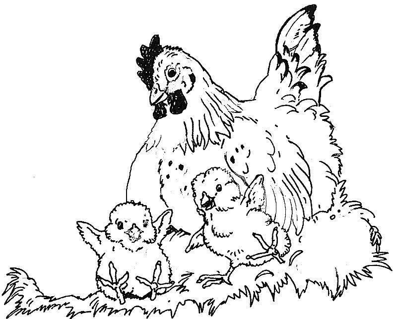 hen and chicks coloring pages - photo#19