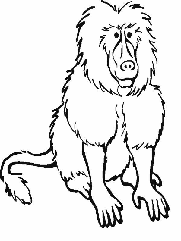 Small Animals From Forrest Coloring Pages