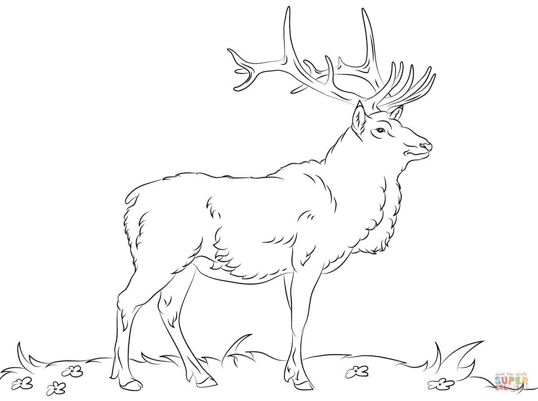рисунок раскраска лося