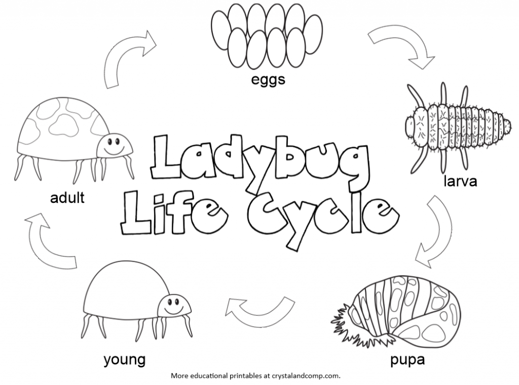 Life Cycle Of A Plant Coloring Page Coloring Home