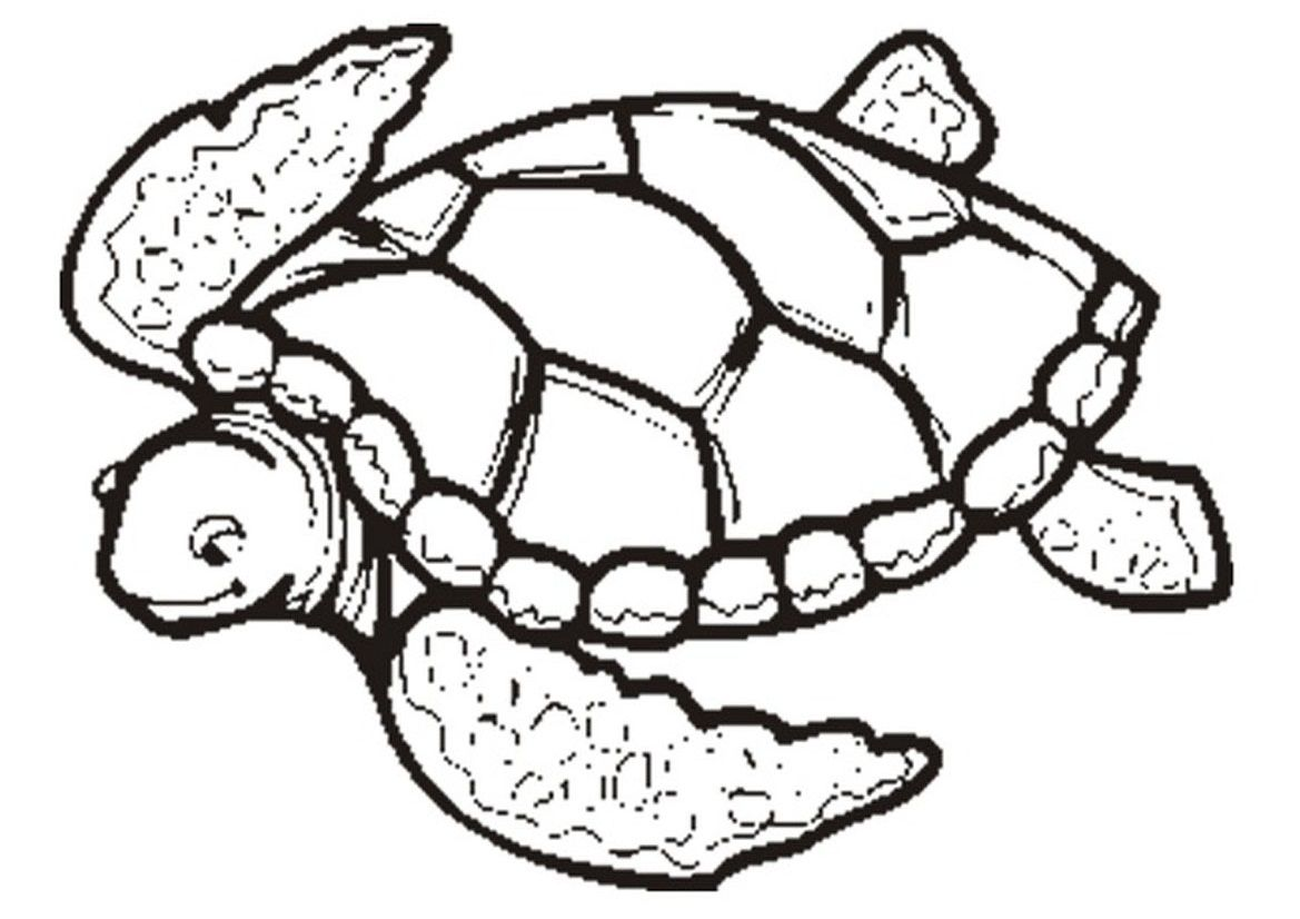 Coloring Pages Sea Turtle Printables  Coloring Home