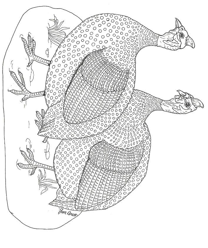 Jan Brett The Hat Coloring Pages Coloring Home