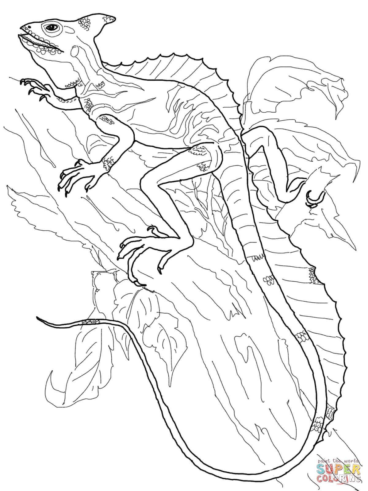 Basilisk Lizard Coloring Page