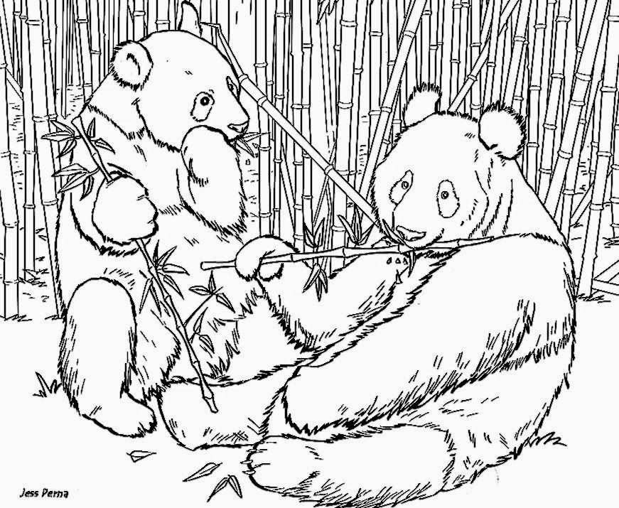 Panda Coloring Pages For Adults Coloring Home