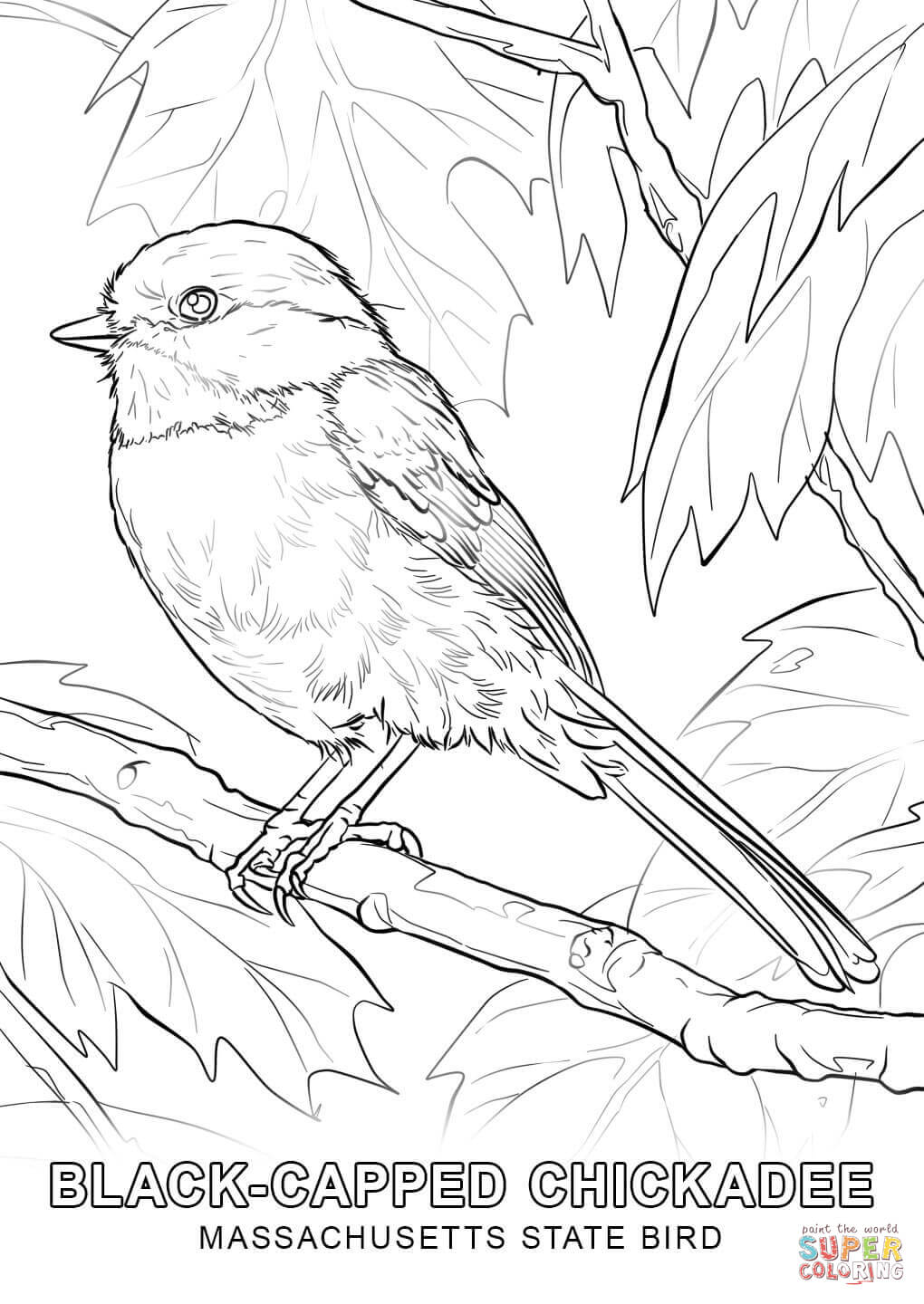 Coloring Page Of Alabama State Bird High Quality Coloring