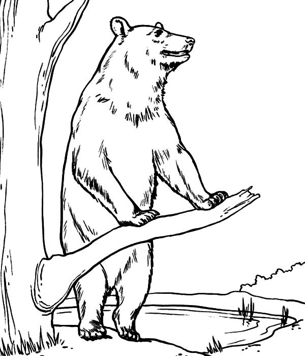 Brown Bear Coloring Page - Auromas.com