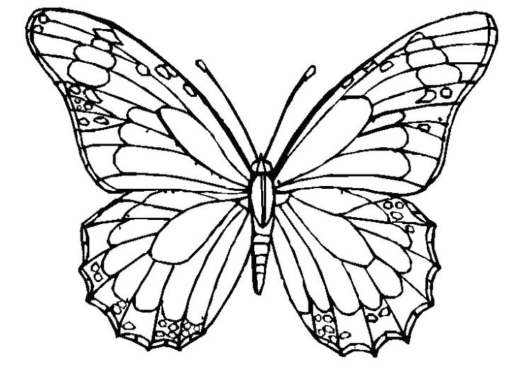 Free Printable Butterfly Coloring Pages For Adults. 1000 ...