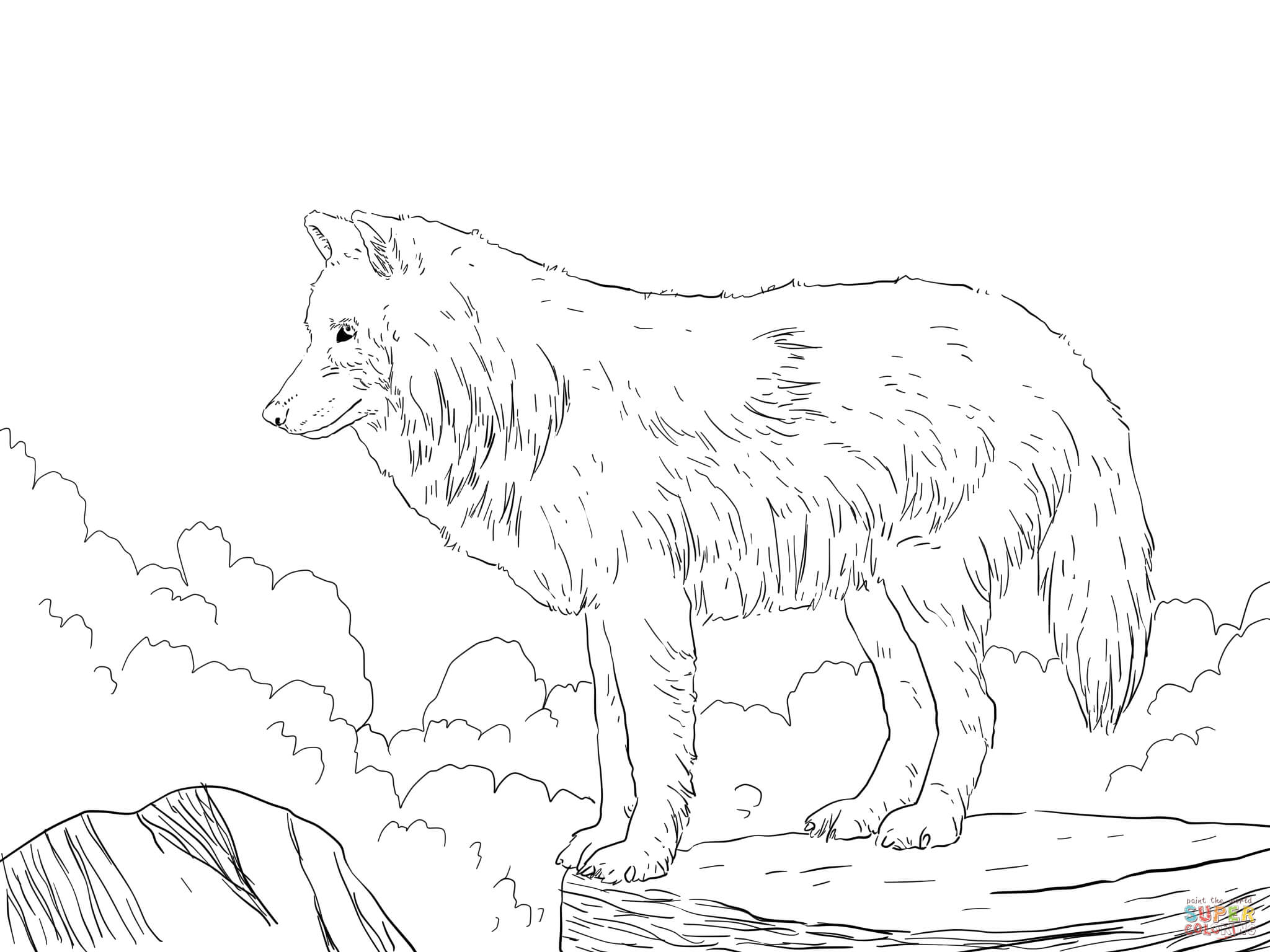 Realistic wolf coloring pages to print coloring home for Free printable wolf coloring pages
