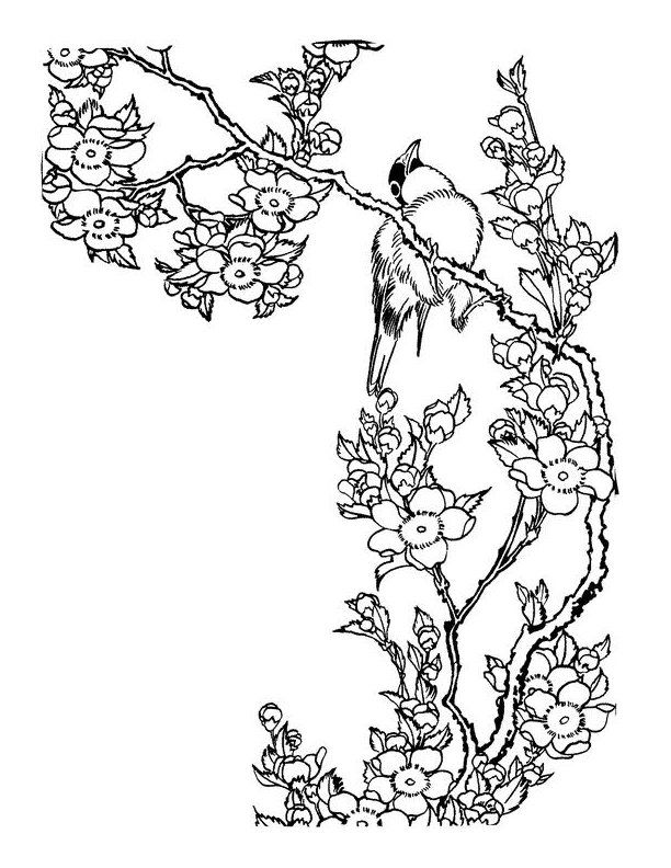 Coloring Pages Of Le Blossoms : Cherry blossom coloring page az pages