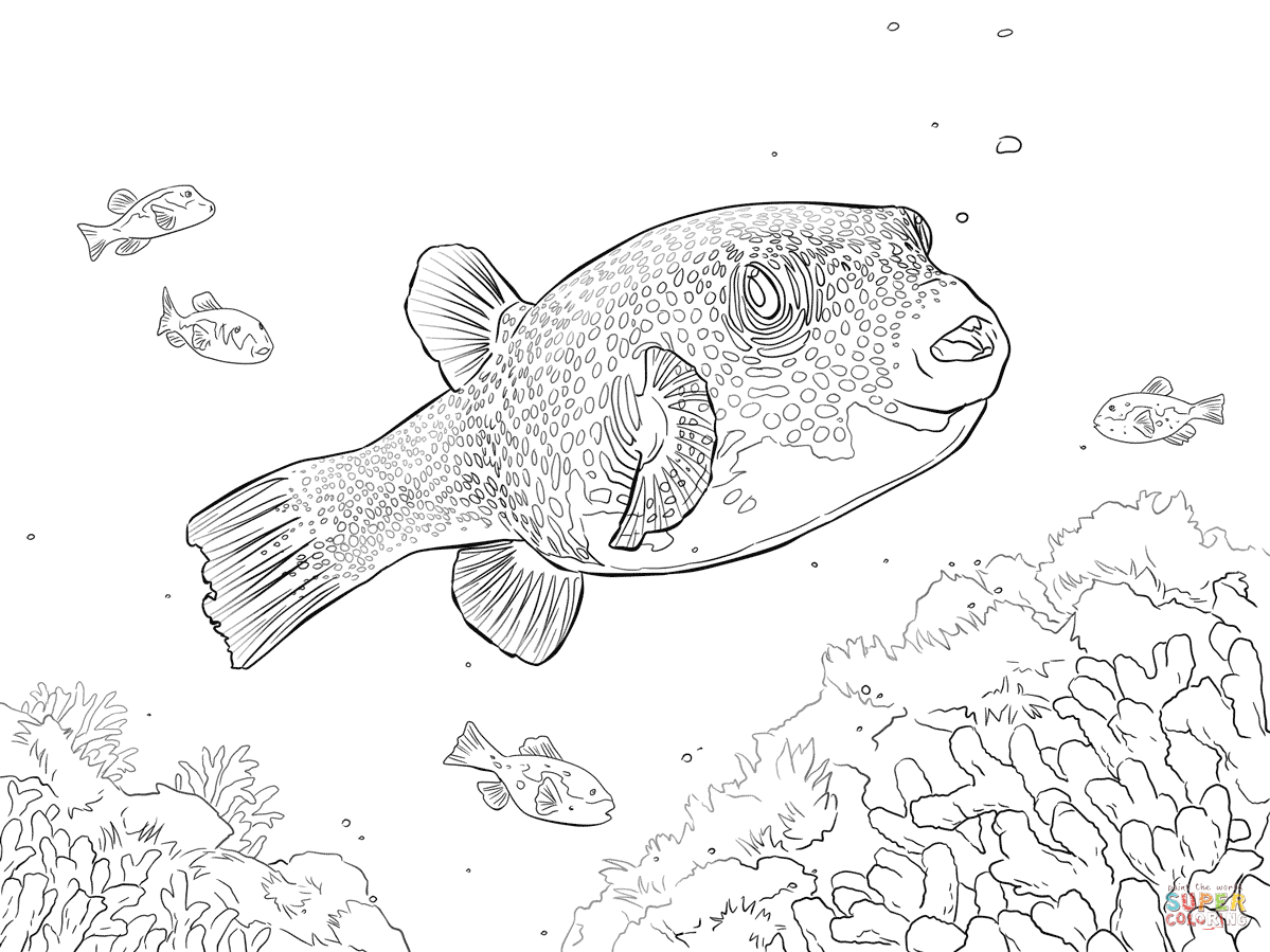 ocean puffer fish coloring pages free - photo #34