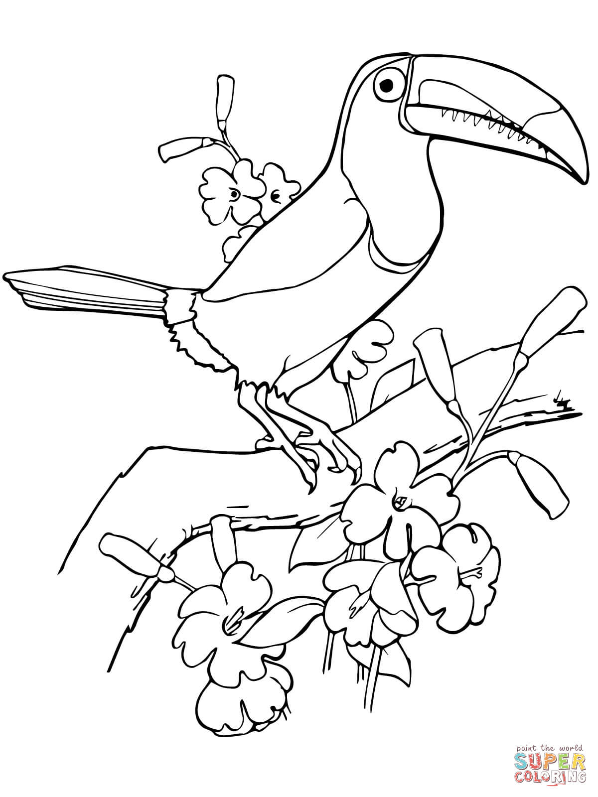 toucan coloring page coloring home