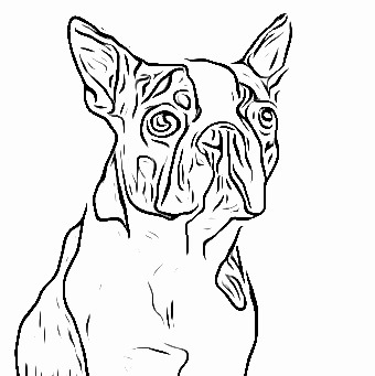 Boston Terrier Coloring Pages