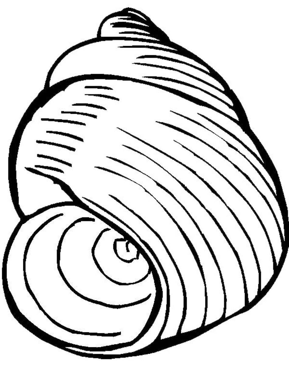 Coloring Pages Of Seashells - Coloring Home