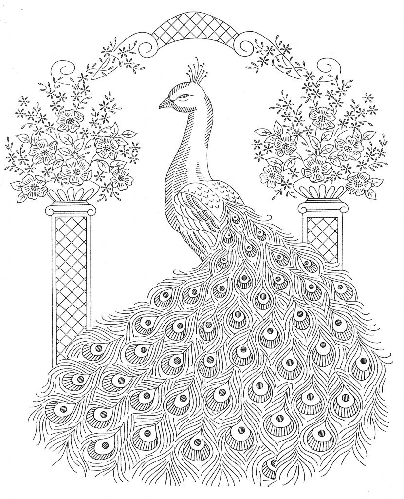 Peacock Adult Coloring Page AZ Pages