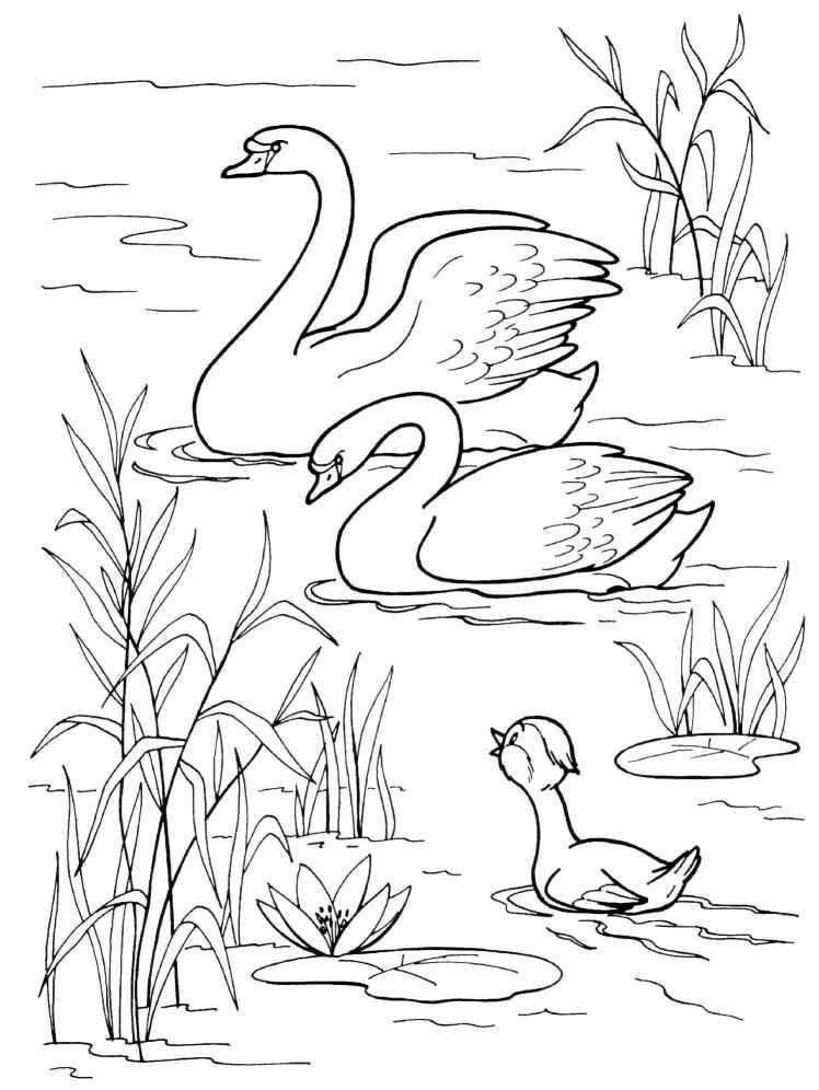 Ugly duckling coloring pages coloring home for Duckling coloring pages