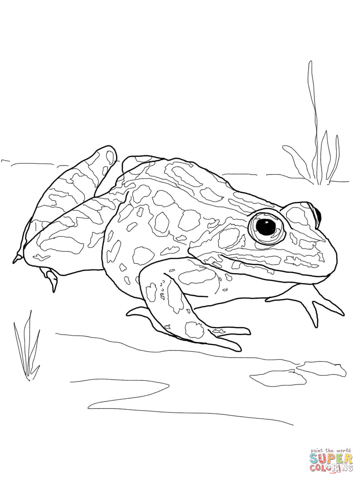 Poison Dart Frog Coloring Page Coloring Home Coloring Coloring Pages