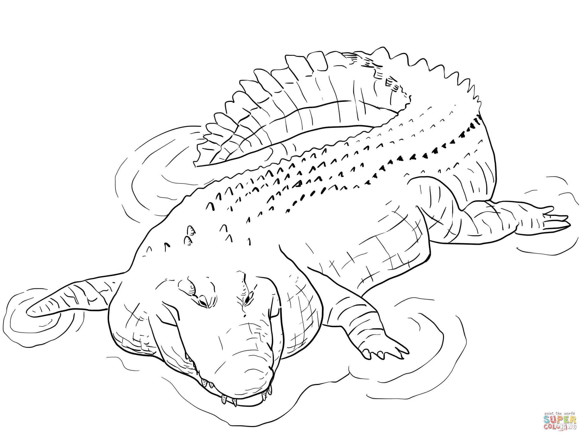 baby alligator coloring pages - photo#21