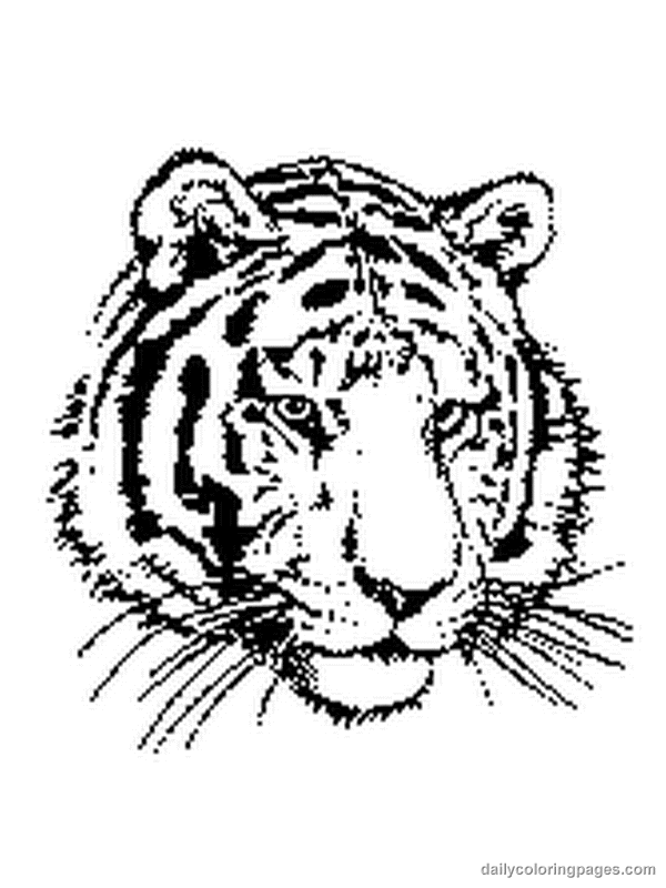 Tiger animal coloring pages coloring home for Coloring pages of tiger