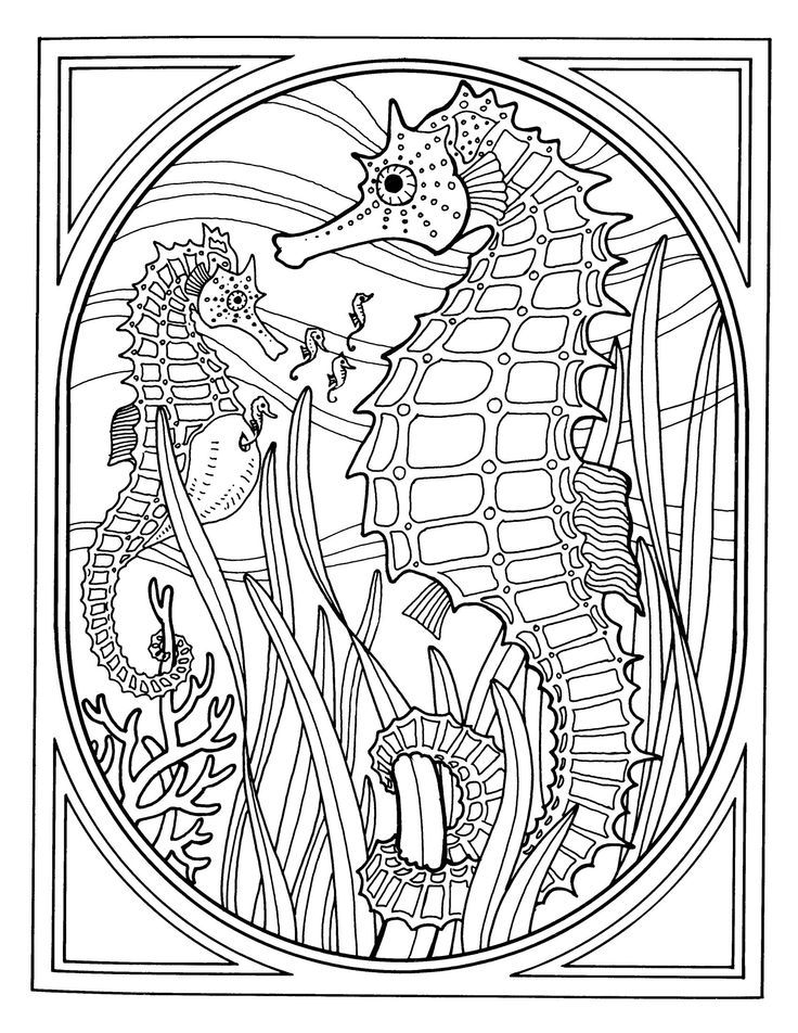 Best Photos of Seahorse Coloring Pages For Adults - Seahorse ...