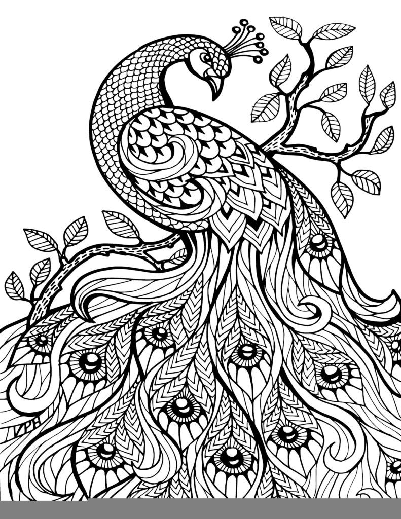 Coloring Pages: Zentangle And Adult Coloring On Zentangle Adult ...