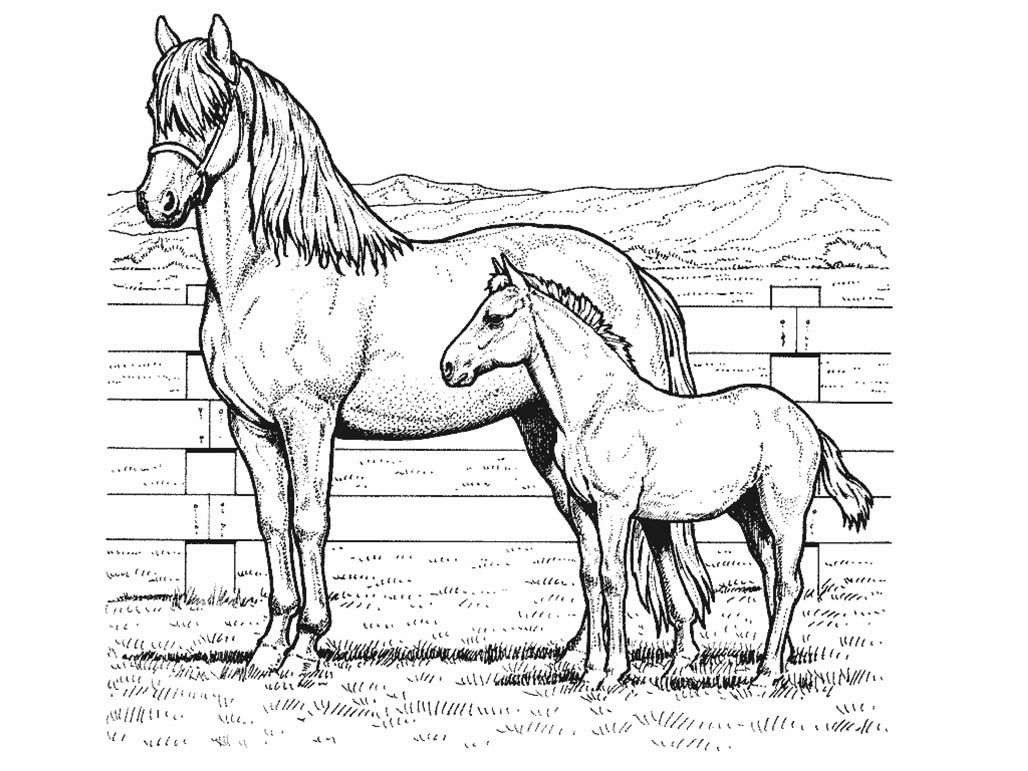 Kawaii Horse Coloring Page Coloring Home