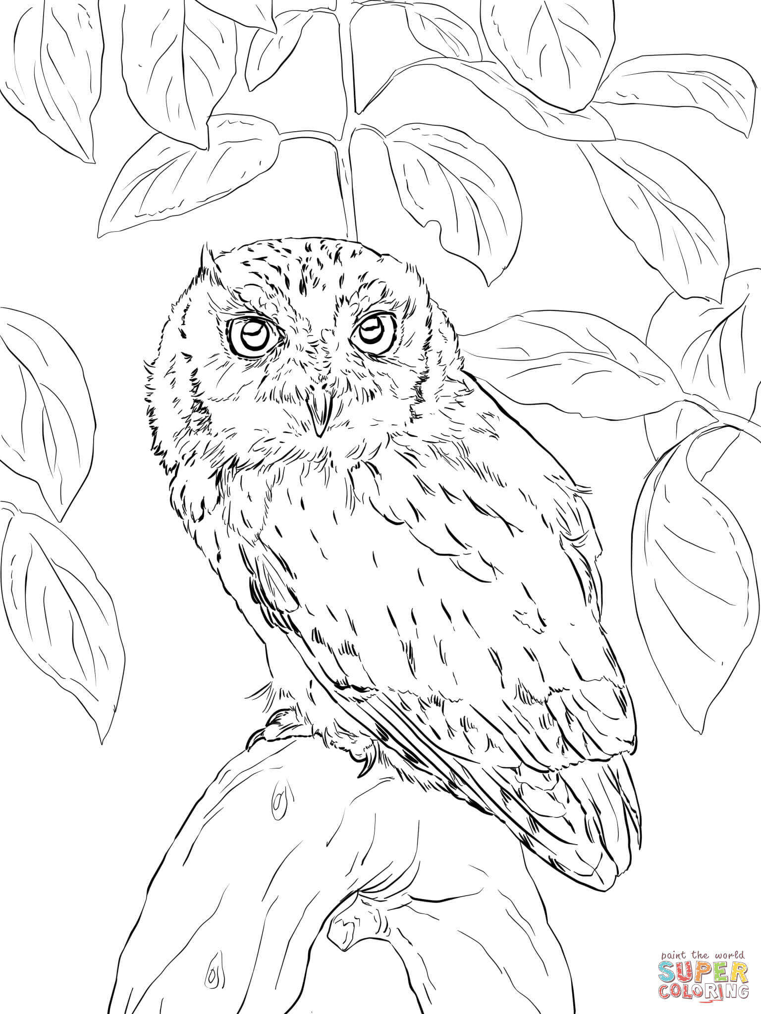 Flying Owl Coloring Pages - Coloring Home