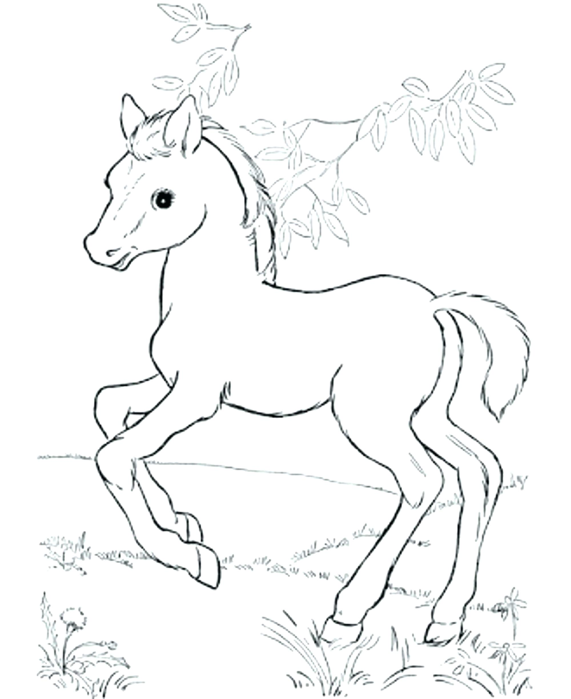 Baby Horses Coloring Pages Coloring Home
