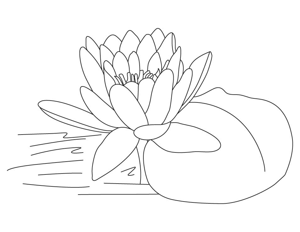 Printable Coloring Pages Lotus