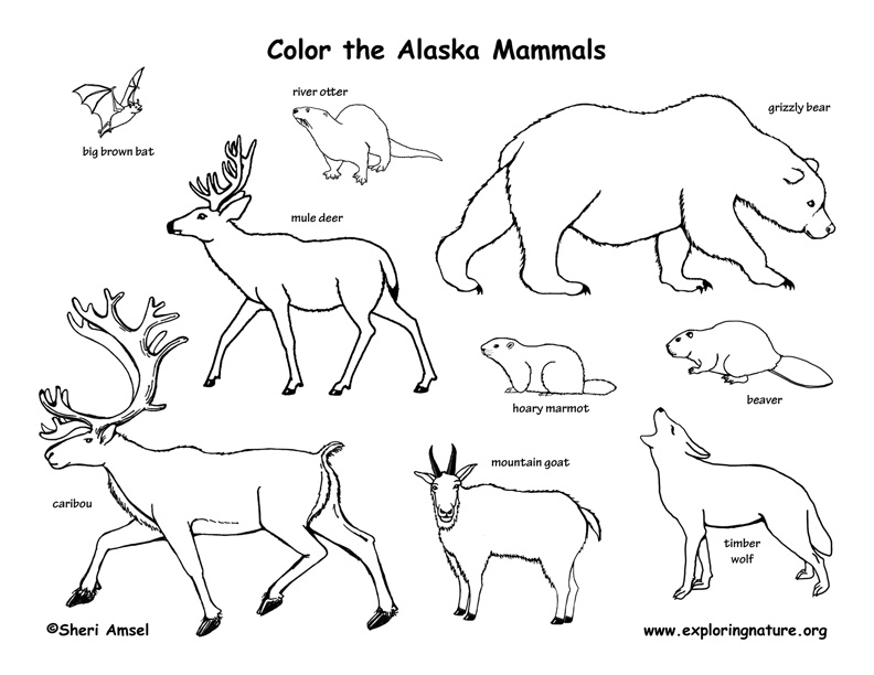 alaska flag coloring pages - photo#16