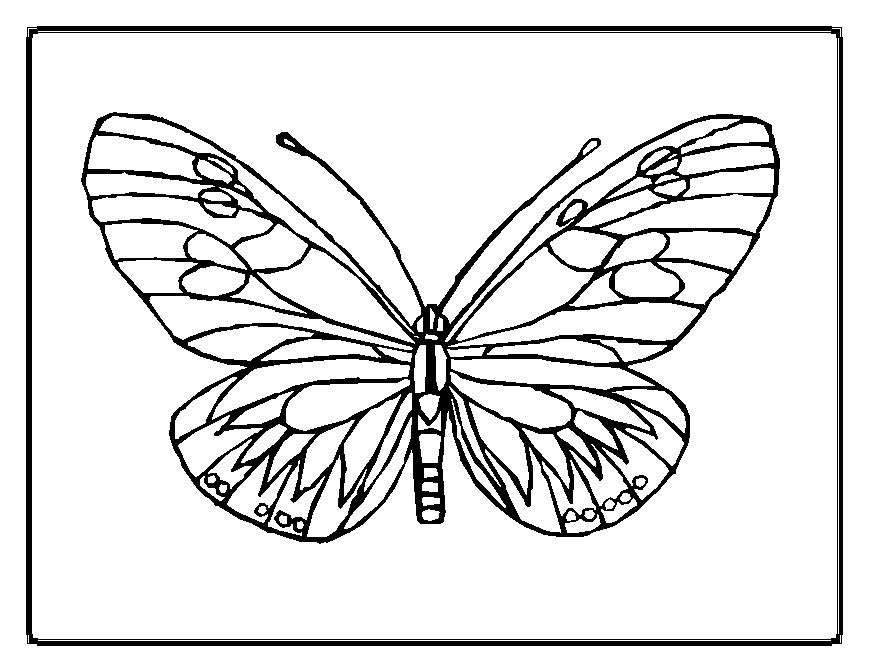 coloring pages painted lady butterfly - photo#4