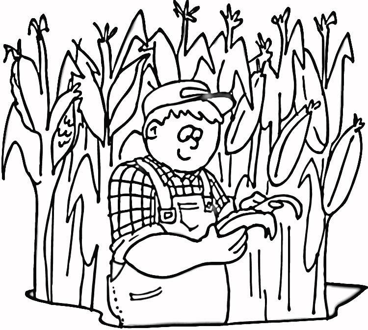 Cornfield Coloring Page Corn Home
