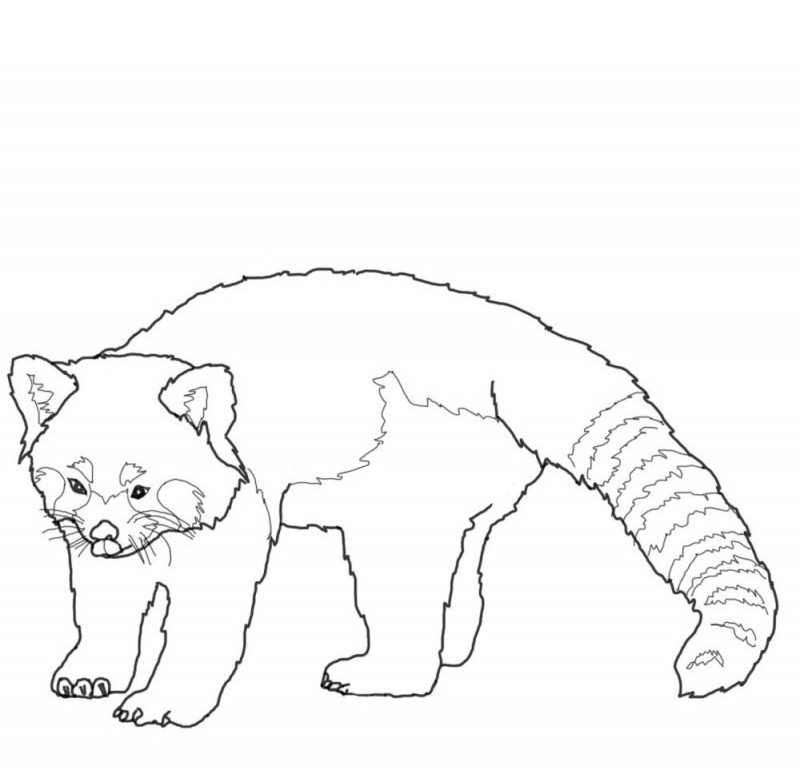 red panda coloring pages | Large Printable Coloring Picture Of Red Panda Coloring Pages