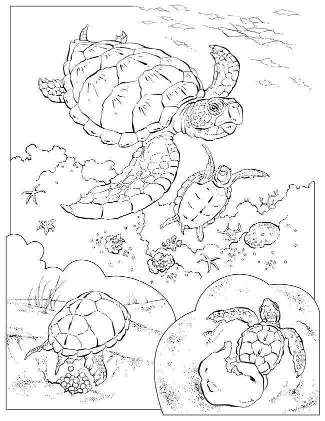 Related Pictures Sea Marine Tropical Fish Coloring Pages For Kids