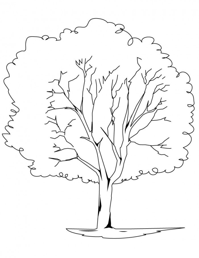 Oak Tree Coloring Page Az Coloring Pages Oak Tree Coloring Page