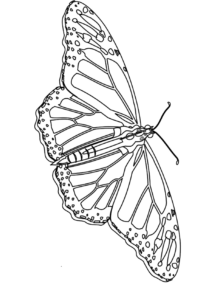 coloring pages painted lady butterfly - photo#9