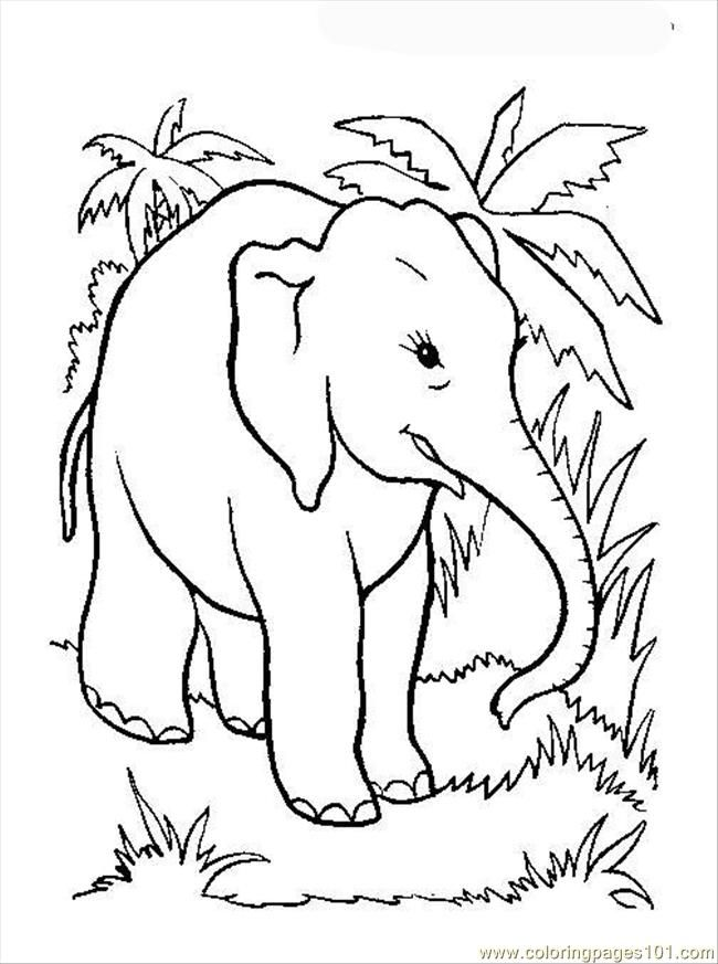 Coloring Pages Elephant Page 12 Mammals