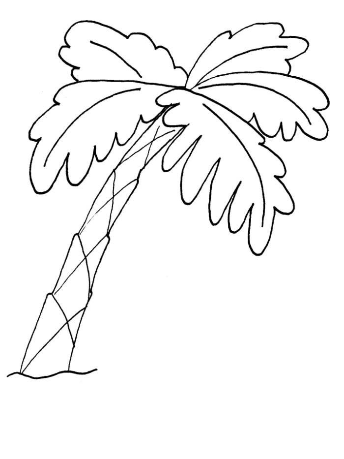 free palm leaves coloring pages - photo#27